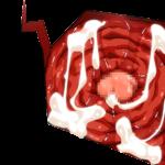 エロコラに使える「子宮」素材 カットインと拡大画像